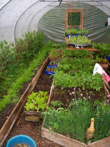 Large Polytunnel in May