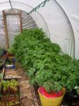 Small Polytunnel in may
